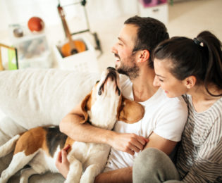 Laughing couple playing with dog on couch